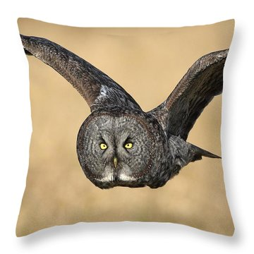 Great Gray Owl In Flight Throw Pillow by Daniel Behm