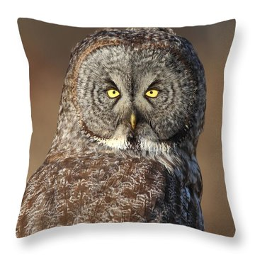 Great Gray Owl Portrait Throw Pillow by Daniel Behm