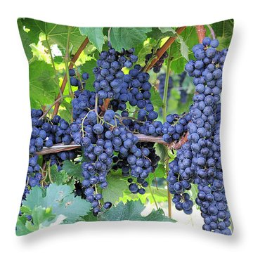 Great Lakes Vineyard Near Lake Erie Throw Pillow by Steve Archbold