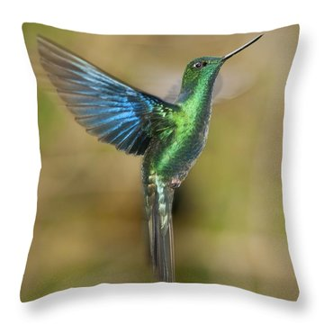 Great Sapphirewing Hummingbird Throw Pillow by Dan Suzio