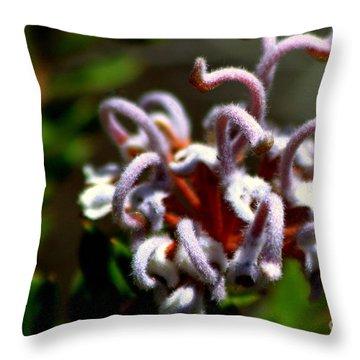 Throw Pillow featuring the photograph Great Spider Flower by Miroslava Jurcik