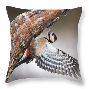 Great Spotted Woodpecker Male Sweden Throw Pillow