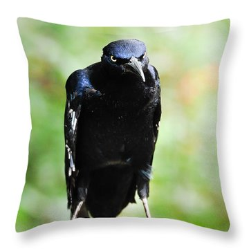 Great Tailed Grackle Throw Pillow