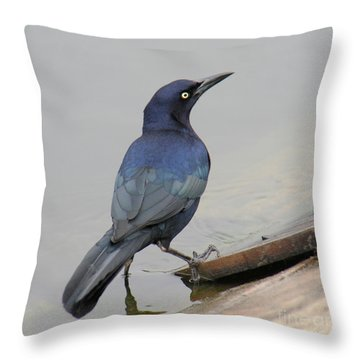 Throw Pillow featuring the photograph Great-tailed Grackle Posing by Bob and Jan Shriner