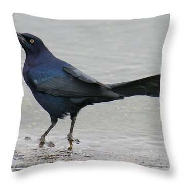 Throw Pillow featuring the photograph Great-tailed Grackle Wading by Bob and Jan Shriner