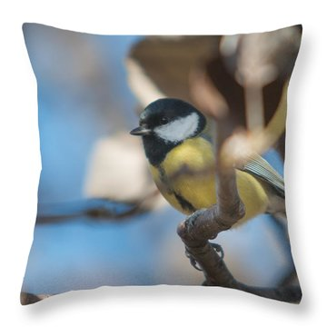 Throw Pillow featuring the photograph Great Tit Songbird by Jivko Nakev