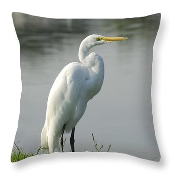 Great White Egret Throw Pillow by Charles Beeler