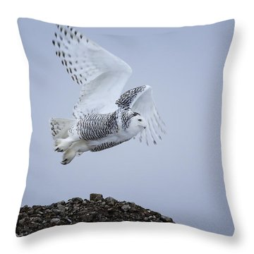 Throw Pillow featuring the photograph Great White Owl by Gary Hall