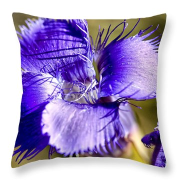 Greater Fringed Gentian Throw Pillow by Teresa Zieba