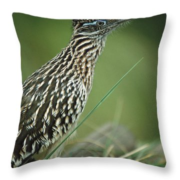 Greater Roadrunner Portrait Throw Pillow