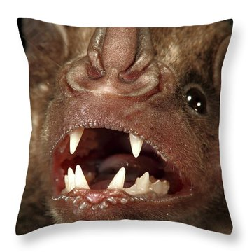 Greater Spear-nosed Bat Throw Pillow by Christian Ziegler