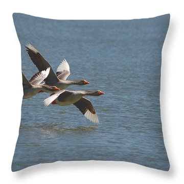Greater White-fronted Geese In Flight Series 4 Throw Pillow