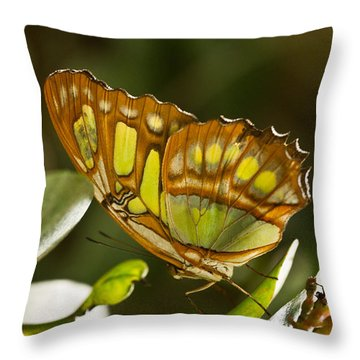 Green And Brown Tropical Butterfly Throw Pillow