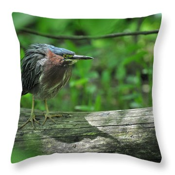 Green Backed Heron At The Swamp Throw Pillow by Rebecca Sherman