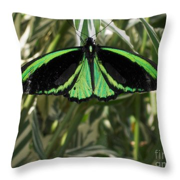 Throw Pillow featuring the photograph Green Butterfly by Brenda Brown