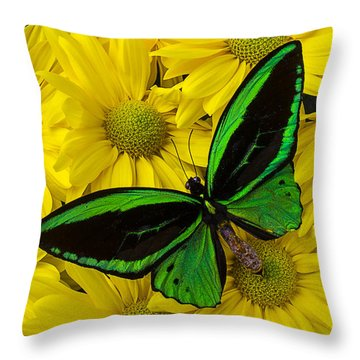 Green Butterfly On Yellow Mums Throw Pillow by Garry Gay