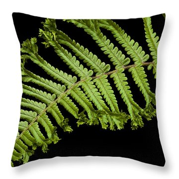 Green Curve Throw Pillow by Trevor Chriss