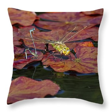 Throw Pillow featuring the photograph Green Darner Dragonfly With Friends by Rona Black