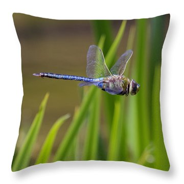 Green Darner Flight Throw Pillow by David Lester