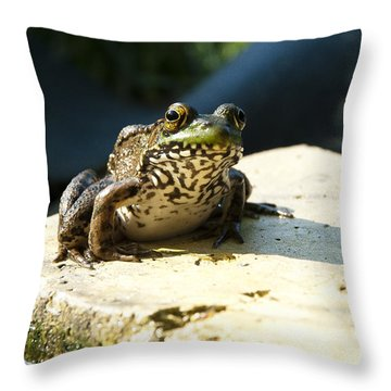 Throw Pillow featuring the photograph Green Frog - Lookin At Yah by Janice Adomeit