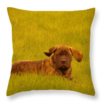Green Grass And Floppy Ears Throw Pillow by Jeff Swan