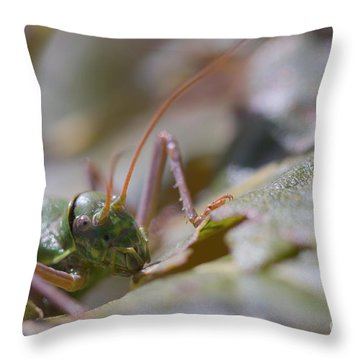Throw Pillow featuring the photograph Green Grasshopper Ephippiger by Jivko Nakev