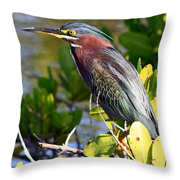 Green Heron At Minwr Throw Pillow