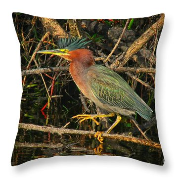 Green Heron Basking In Sunlight Throw Pillow