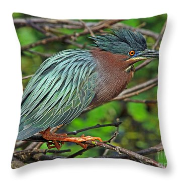 Green Heron Breeding Colors Throw Pillow by Larry Nieland