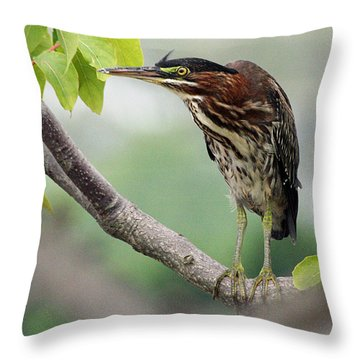 Green Heron In Sumac Throw Pillow