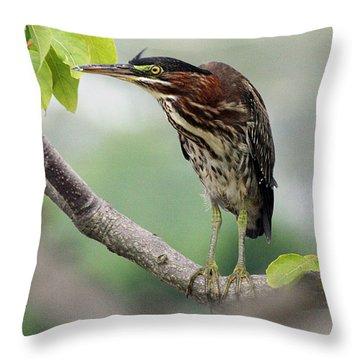 Green Heron In Sumac Throw Pillow