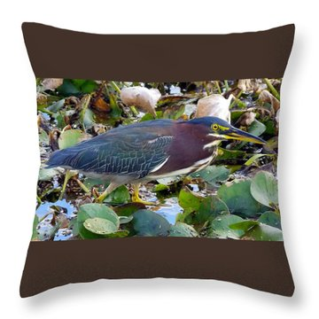 Green Heron La Chua Trail 2 Throw Pillow