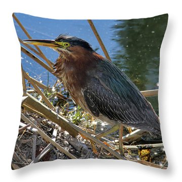 Green Heron  Throw Pillow by Mariola Bitner