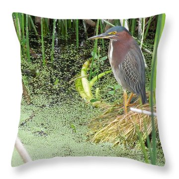 Throw Pillow featuring the pyrography Green Heron by Ron Davidson