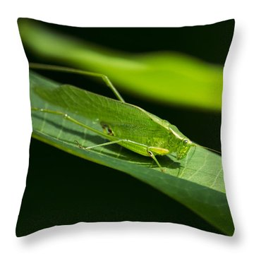 Green Katydid Throw Pillow by Christina Rollo