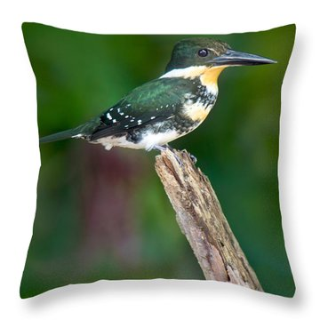 Green Kingfisher Chloroceryle Throw Pillow by Panoramic Images