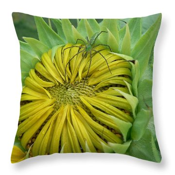 Throw Pillow featuring the photograph Green Spider On A Sunflower by MM Anderson