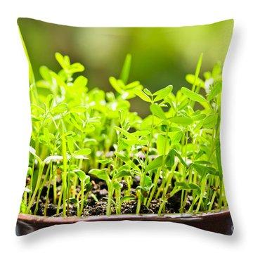 Green Spring Seedlings Throw Pillow by Elena Elisseeva
