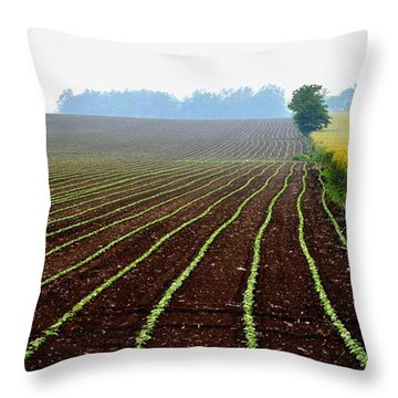Green Track Meander Throw Pillow