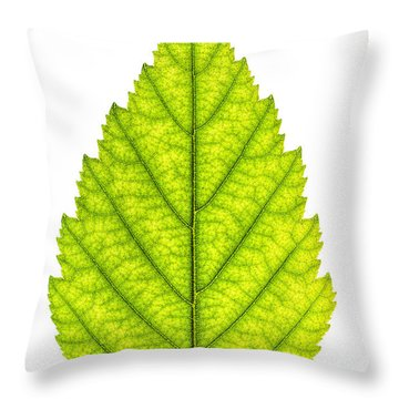 Green Tree Leaf Throw Pillow by Elena Elisseeva