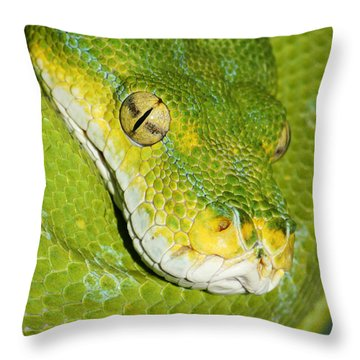 Throw Pillow featuring the photograph Green Tree Python #2 by Judy Whitton