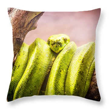 Green Tree Python Throw Pillow by Pati Photography