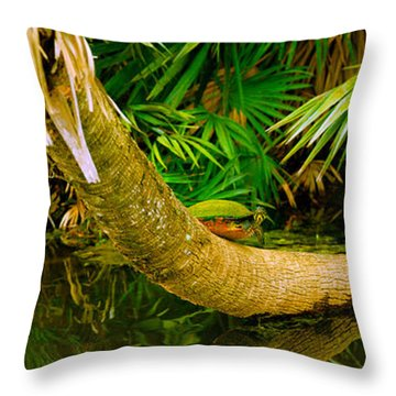 Green Turtle Chelonia Mydas In A Pond Throw Pillow