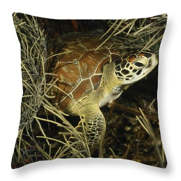 Green Turtle In Soft Corals Throw Pillow