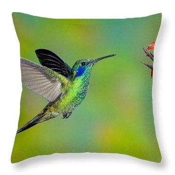 Green Violet-ear Hummingbird Throw Pillow by Anthony Mercieca