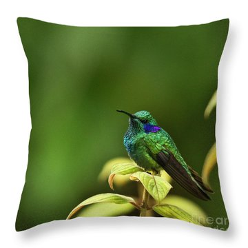 Green Violetear Hummingbird Throw Pillow