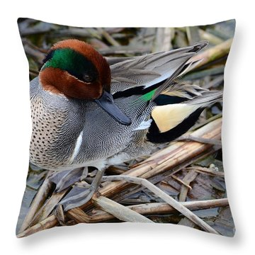 Green-winged Teal Throw Pillow by Debra Martz
