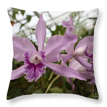 Greenhouse Ruffly Orchids Throw Pillow by Carol Groenen