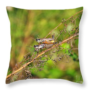 Gregarious Grasshoppers Throw Pillow