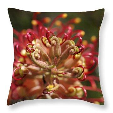 Grevillea Superb Australian Flora Throw Pillow